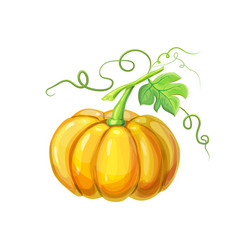 Realistic orange big ripe pumpkin with stem green vector