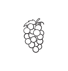 bunch of grapes hand drawn sketch icon vector image