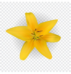 Colorful yellow naturalistic lily flower vector
