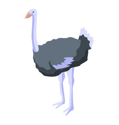 Domestic ostrich icon isometric style vector