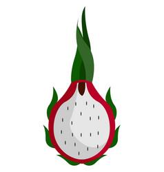 pitahaya cactus on white background vector image
