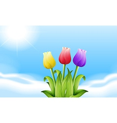 Three blooming flowers under the sunlight vector