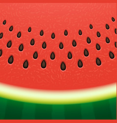 Watermelon texture background vector