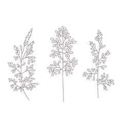 wild and herbs plants set outline botanical hand vector image