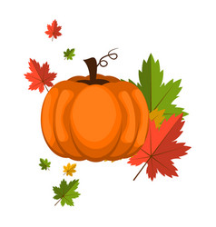 pumpkin over white background vector image vector image