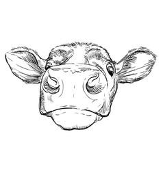 Funny head bull hand drawing vector