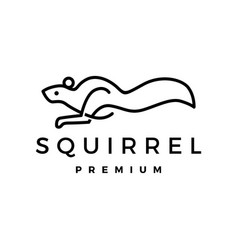 squirrel logo icon vector image