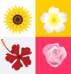 Blossom Flower vector