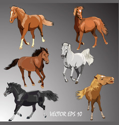 Collection horses of different breeds vector