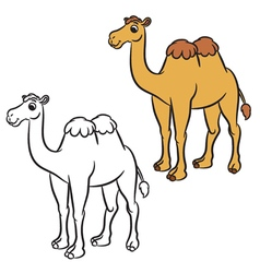 cute camel vector image