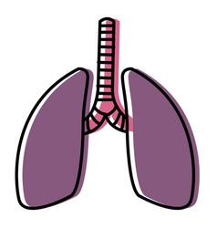 Lungs human organ vector