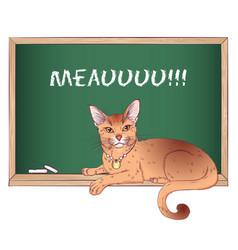 Abyssinian cat on chalkboard vector
