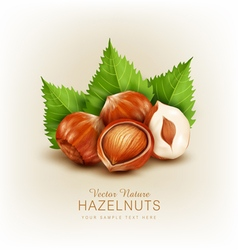 hazelnut isolated element for design vector image
