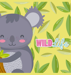 koala wildlife animal cartoon vector image