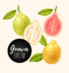 Set of guava fruits vector
