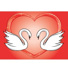 White swans and red heart - card vector
