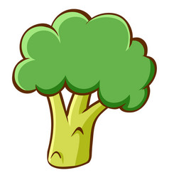 Broccoli on white background vector