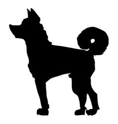 japanese dog akita vector image
