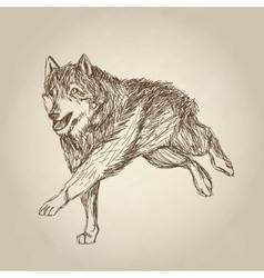 Wolf design Animal conceptWildlife animal vector