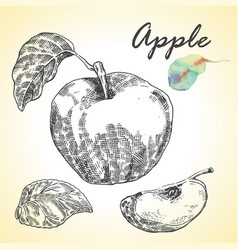 collection of highly detailed hand drawn apples vector image
