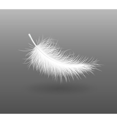 feather falling light small vector image