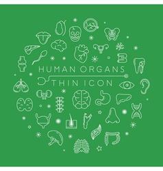 Human organs thin icons eps10 format vector image