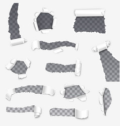 paper torn rips holes and rolled flaps realistic vector image