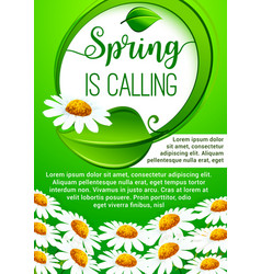spring holidays floral banner with daisy flowers vector image