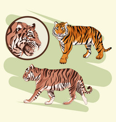 beautiful tiger drawing vector image