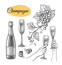 champagne sketch set vector image