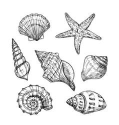 Hand drawn sea shells starfish shellfish tropical vector