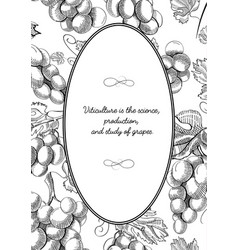 Oval frame composition with grape bunches sketch vector