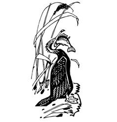 cormorant bird eats fish vector image vector image