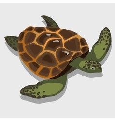 Turtle in a cartoon style closeup vector image vector image