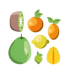 Citric fruits design vector