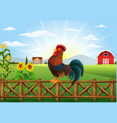 Cute cartoon rooster crowing in the farm fence vector