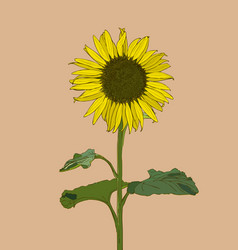 Sunflower set hand drawn sunflowers and leaves vector