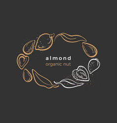 Almond natural nut template vector