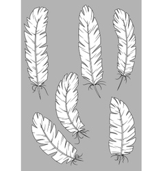 Antique quill pens with white feathers vector