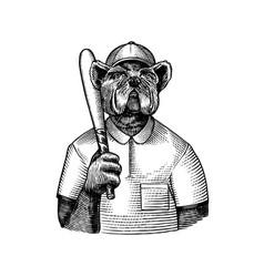Dog character bulldog baseball player with a bat vector