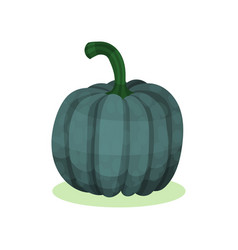 Flat icon of acorn squash natural farm vector