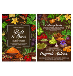 Fresh spices and green herbs on wooden background vector