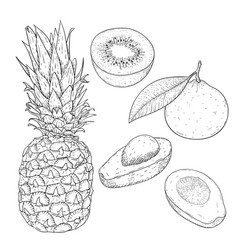 fruits hand drawn sketch vector image