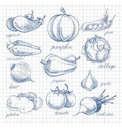 Vegetables doodle ink on notebook sheet in cell vector image vector image