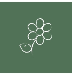Flower icon drawn in chalk vector