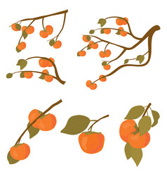 Set persimmon fruit tree branches kaki vector