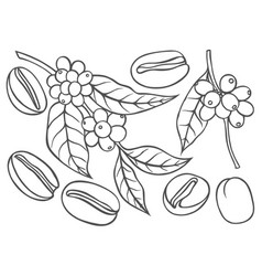 Shoots and grains of coffee vector
