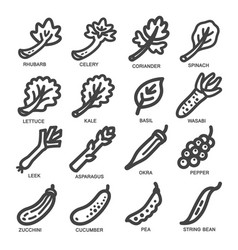 Vegetable thin line icon vector