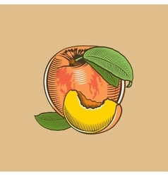 Peach in vintage style Colored vector image vector image