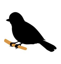 tit bird vector image vector image